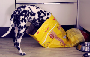 dog in food bag